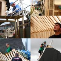 Les défis du bois, un modèle pour l'intelligence collective en entreprise