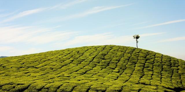 agriculture bio bhupesh-talwar-117424
